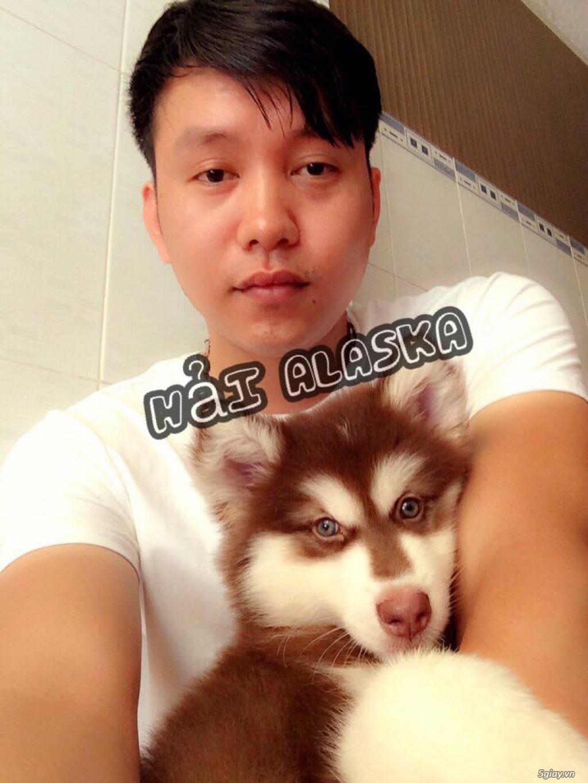 Chuyên bán và nhận oder các giống chó husky,alaska,samoyed..update thường xuyên !!! - 9