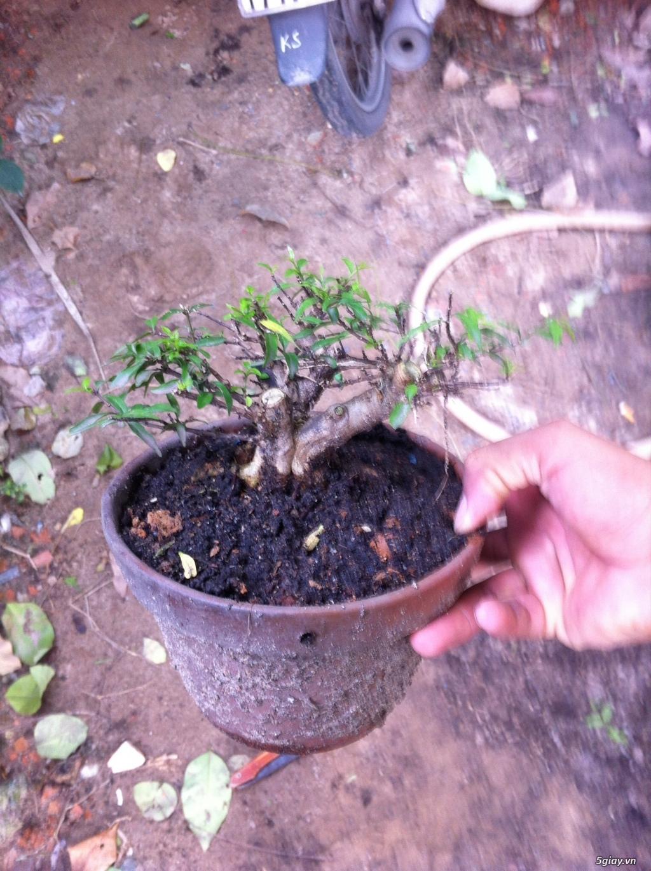 Cây giống và bonsai giao lưu khu vực Sài Gòn - 6
