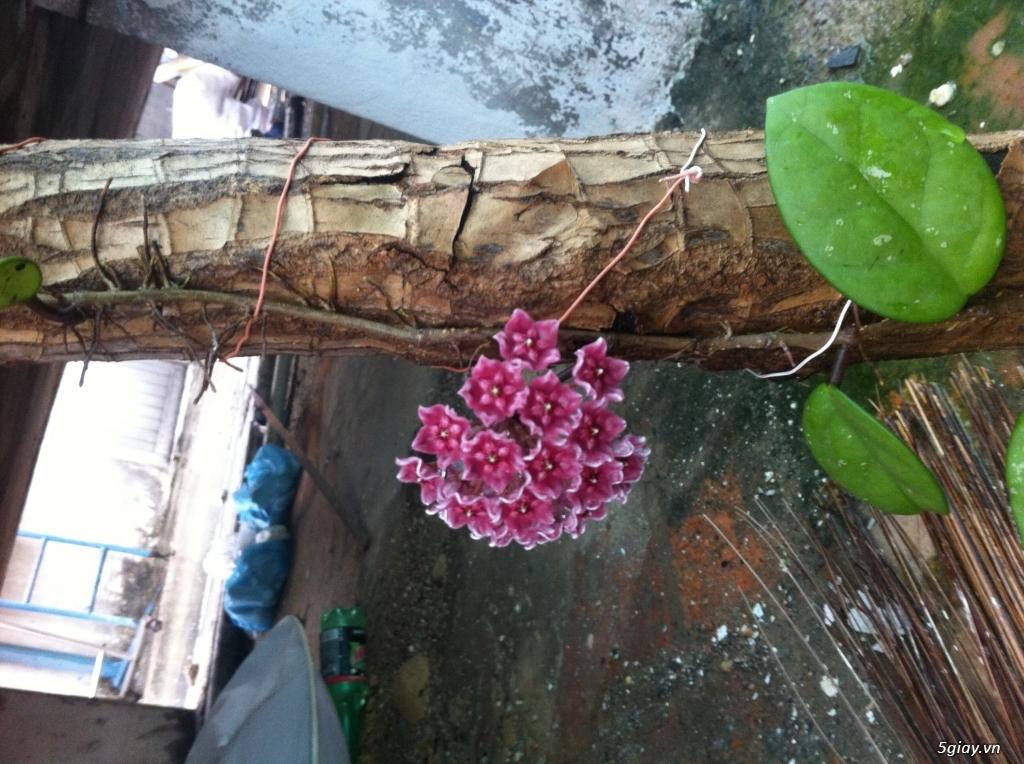 Cây giống và bonsai giao lưu khu vực Sài Gòn - 1
