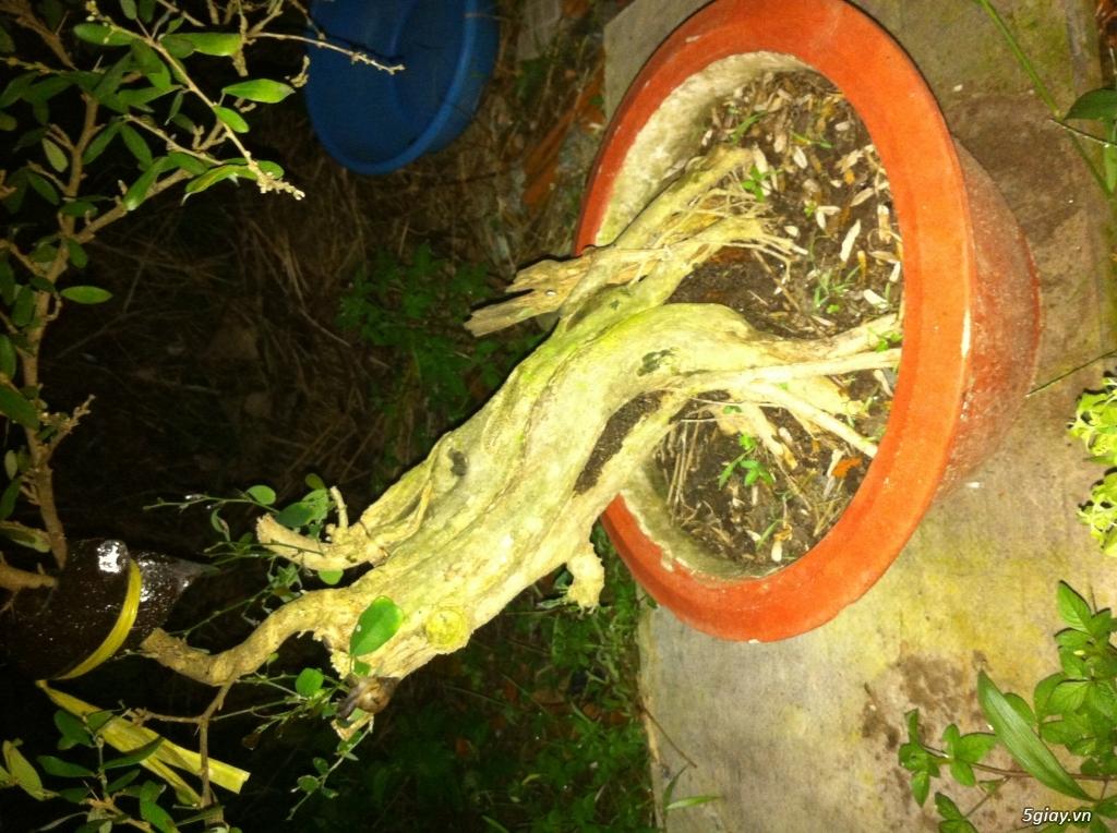 Cây giống và bonsai giao lưu khu vực Sài Gòn - 2