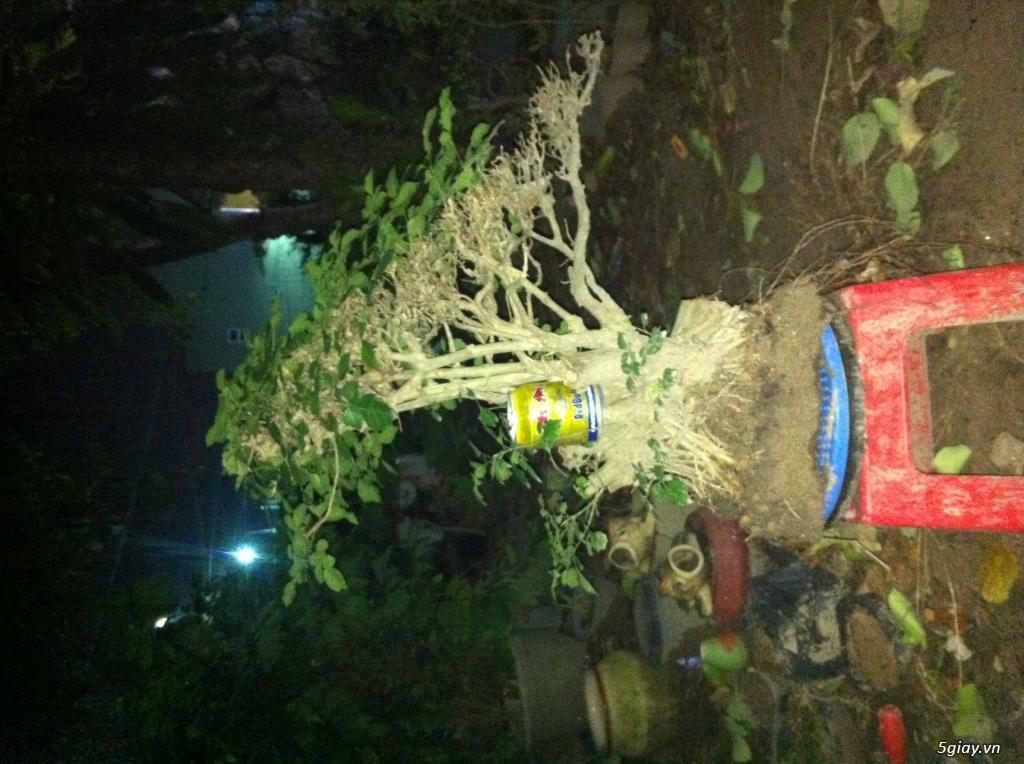 Cây giống và bonsai giao lưu khu vực Sài Gòn - 4