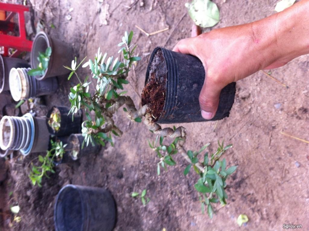 Cây giống và bonsai giao lưu khu vực Sài Gòn