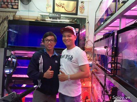 Cá La Hán: Thái Đỏ,King KamFa, King Việt, King Lai, Kim Cương, RedTexas - 39