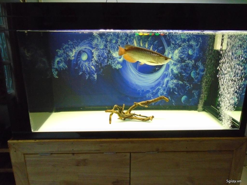 Nhận làm đèn Led hồ cá cho anh em đam mê cá cảnh, thủy sinh - 11