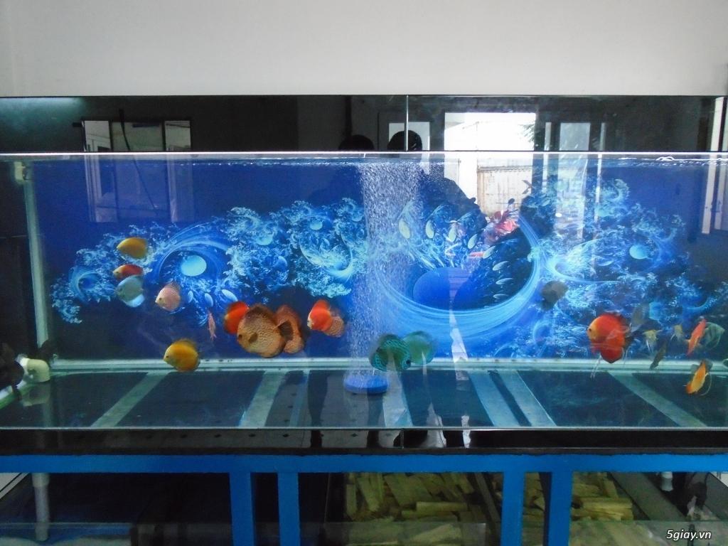 Nhận làm đèn Led hồ cá cho anh em đam mê cá cảnh, thủy sinh - 13