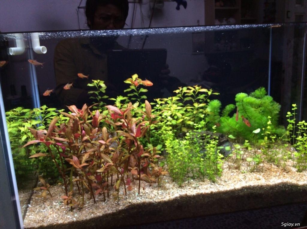Bán hồ cá đẹp - 4