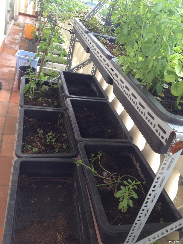 Thanh Lý chậu, giá trồng rau + vườn rau sạch - 3