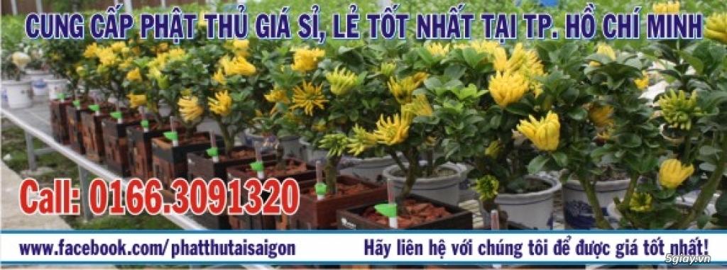 Bán Quả Phật Thủ trưng Tết, đầy đủ ý nghĩa, sang trọng, giá bao rẻ!