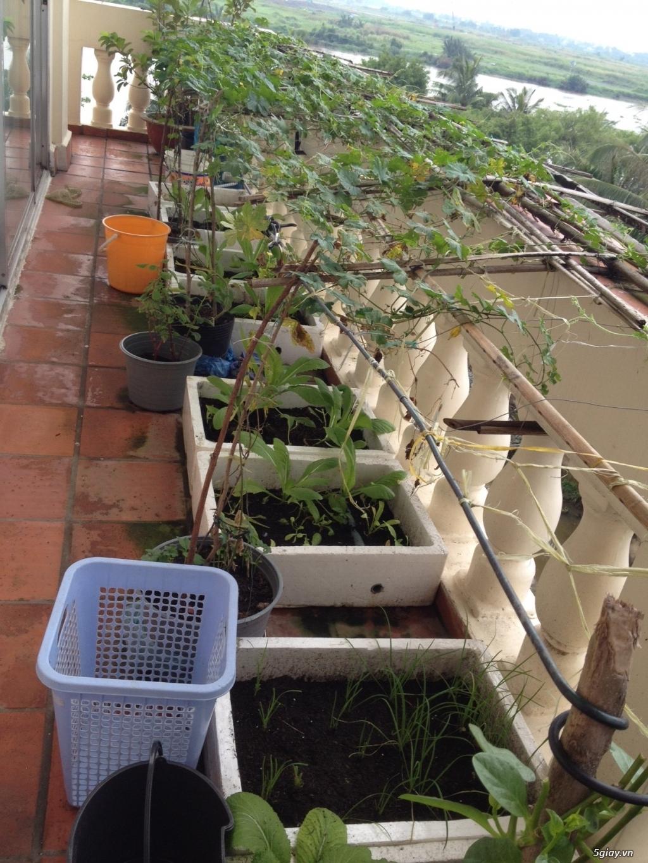 Thanh Lý chậu, giá trồng rau + vườn rau sạch - 1