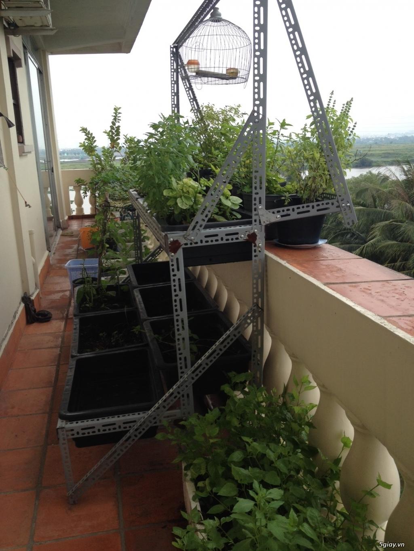 Thanh Lý chậu, giá trồng rau + vườn rau sạch - 4