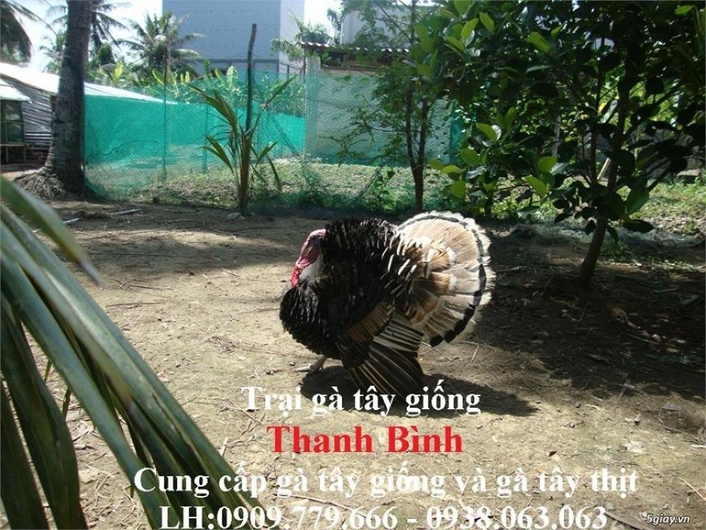 Trại gà tây(gà lôi) giống Thanh Bình.Chuyên cung cấp con giống LH:0909.779.666 - 3