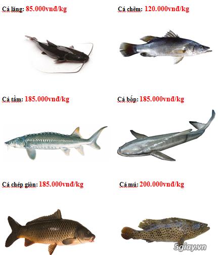 Lê Khang-Cung cấp sỉ và lẻ cá tươi sống: Cá Lăng, Tẩm, Mú,.. - 1