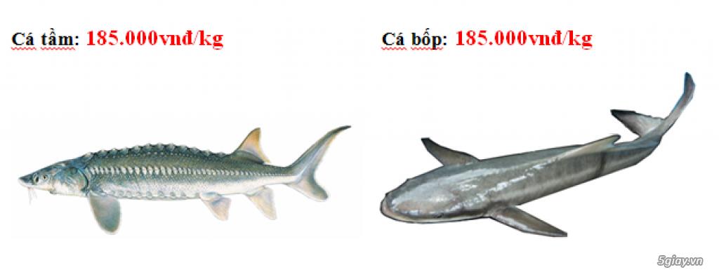 Lê Khang-Chuyên cung cấp sỉ và lẻ cá tươi sống: Cá Lăng, Cá Tầm, Cá Chép Giòn, Mú, Chẽm, Bớp, Baba.. - 2