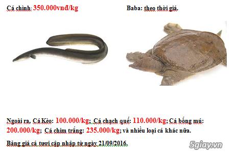 Lê Khang-Cung cấp sỉ và lẻ cá tươi sống: Cá Lăng, Tẩm, Mú,.. - 2