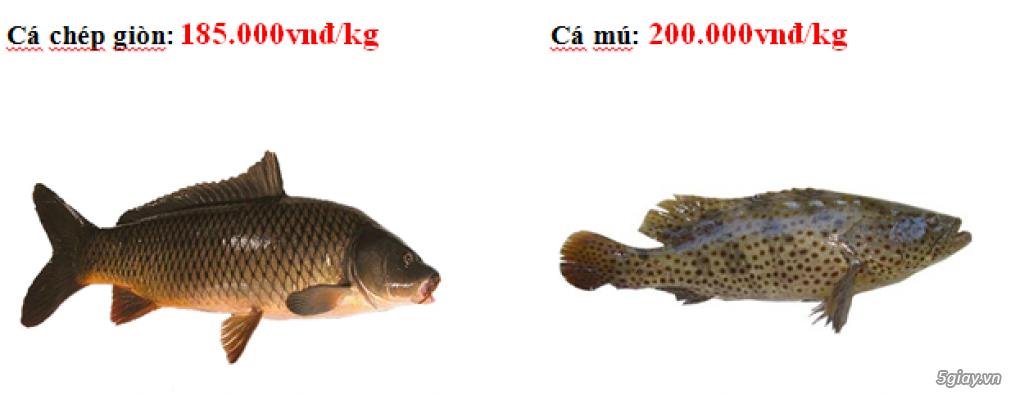 Lê Khang-Chuyên cung cấp sỉ và lẻ cá tươi sống: Cá Lăng, Cá Tầm, Cá Chép Giòn, Mú, Chẽm, Bớp, Baba.. - 3