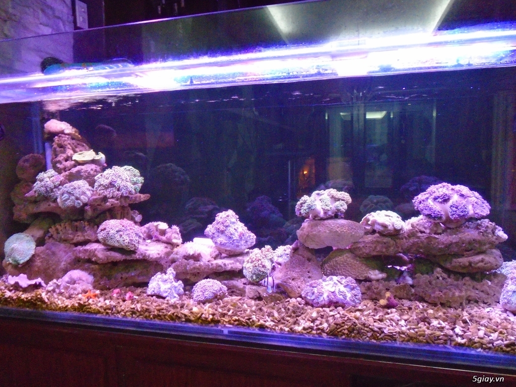 Nhận làm đèn Led hồ cá cho anh em đam mê cá cảnh, thủy sinh - 15