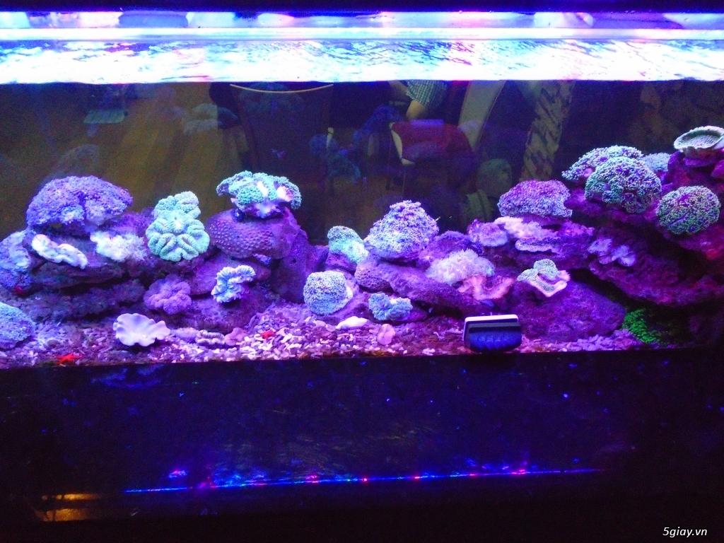 Nhận làm đèn Led hồ cá cho anh em đam mê cá cảnh, thủy sinh - 14