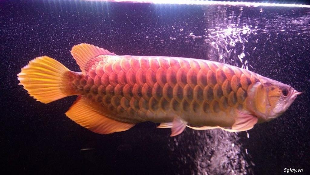 Nhận làm đèn Led hồ cá cho anh em đam mê cá cảnh, thủy sinh - 17