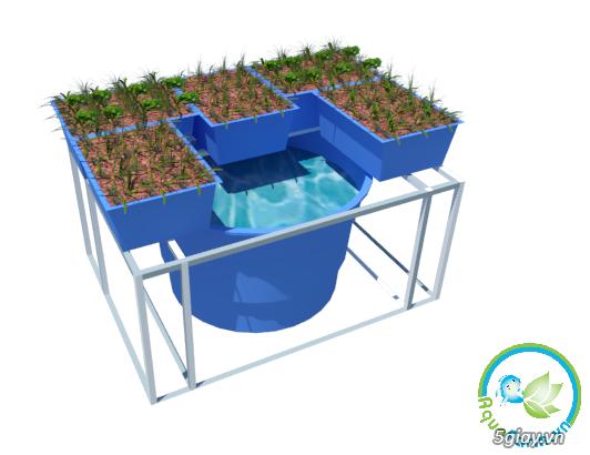 Aquafarm.vn - Hệ thống trồng cây, nuôi cá theo mô hình Aquaponics - 2