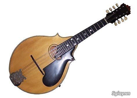 bán đàn mandolin giá rẻ tại cửa hàng nhạc cụ mới Bình Dương - 17