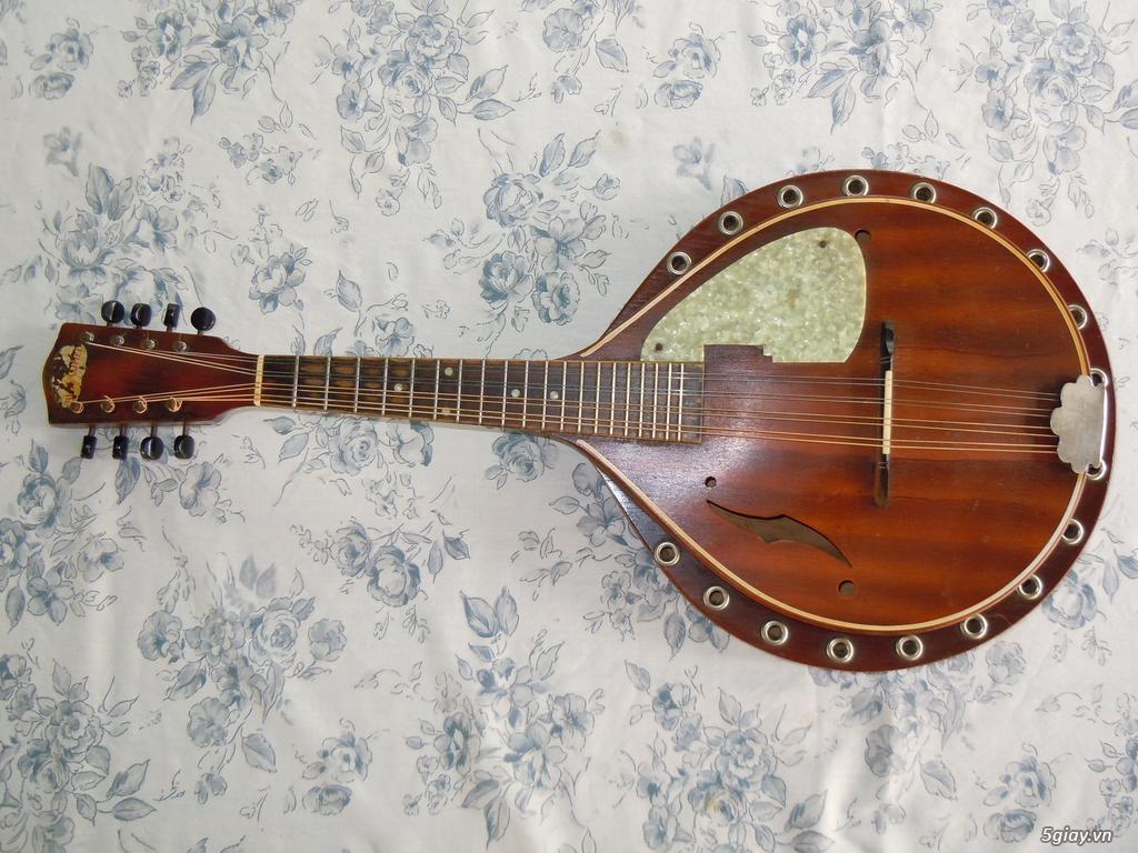 bán đàn mandolin giá rẻ tại cửa hàng nhạc cụ mới Bình Dương - 35
