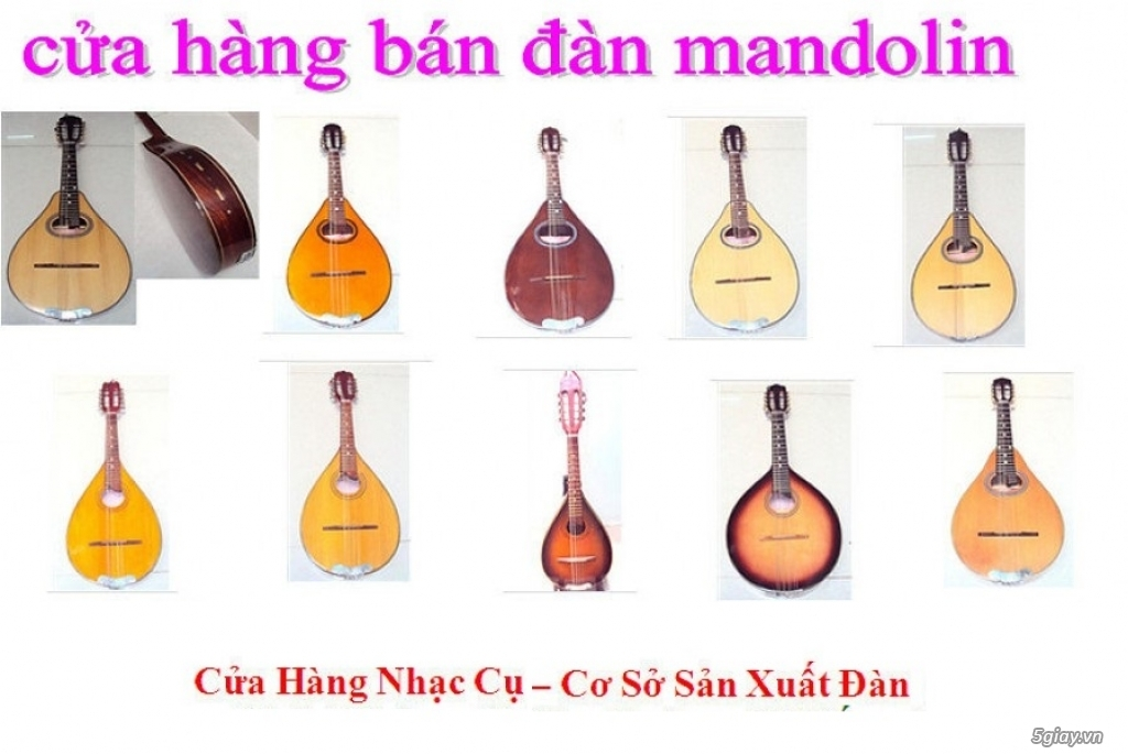 bán đàn mandolin giá rẻ tại cửa hàng nhạc cụ mới Bình Dương - 34