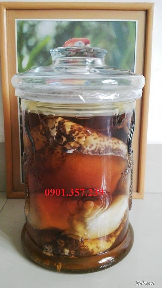 Hải sâm biển còn có tên gọi là vú nàng, xuất xứ huyện đảo Lý Sơn - 1