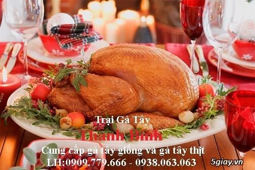 Trại gà tây(gà lôi) giống Thanh Bình.Chuyên cung cấp con giống LH:0909.779.666 - 17