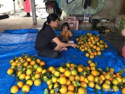 Cam Khe Mây Hương Khe Hà Tĩnh(cam siêu sạch) - 5