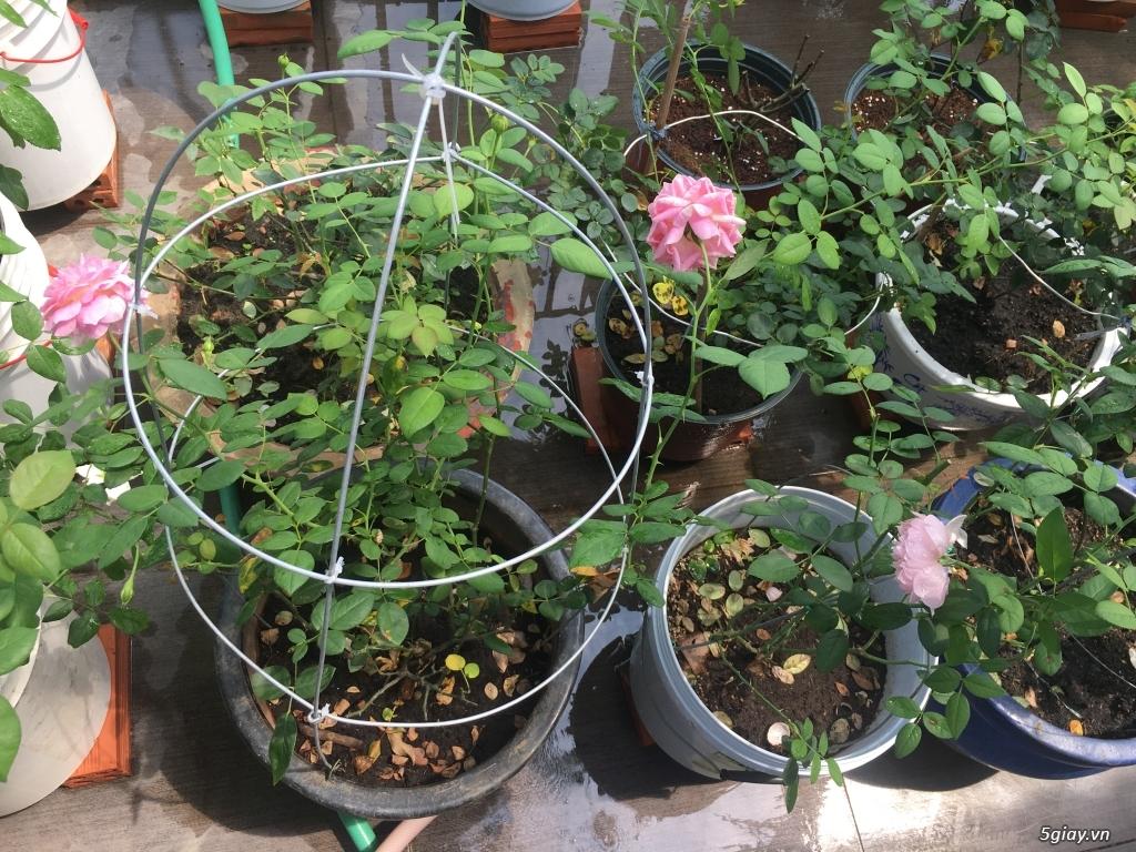 Thanh lí hoa hồng ngoại quận 9 -Sài Gòn - 7