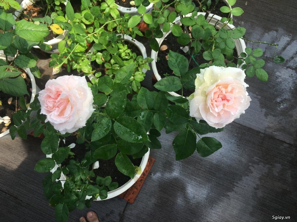 Thanh lí hoa hồng ngoại quận 9 -Sài Gòn - 5