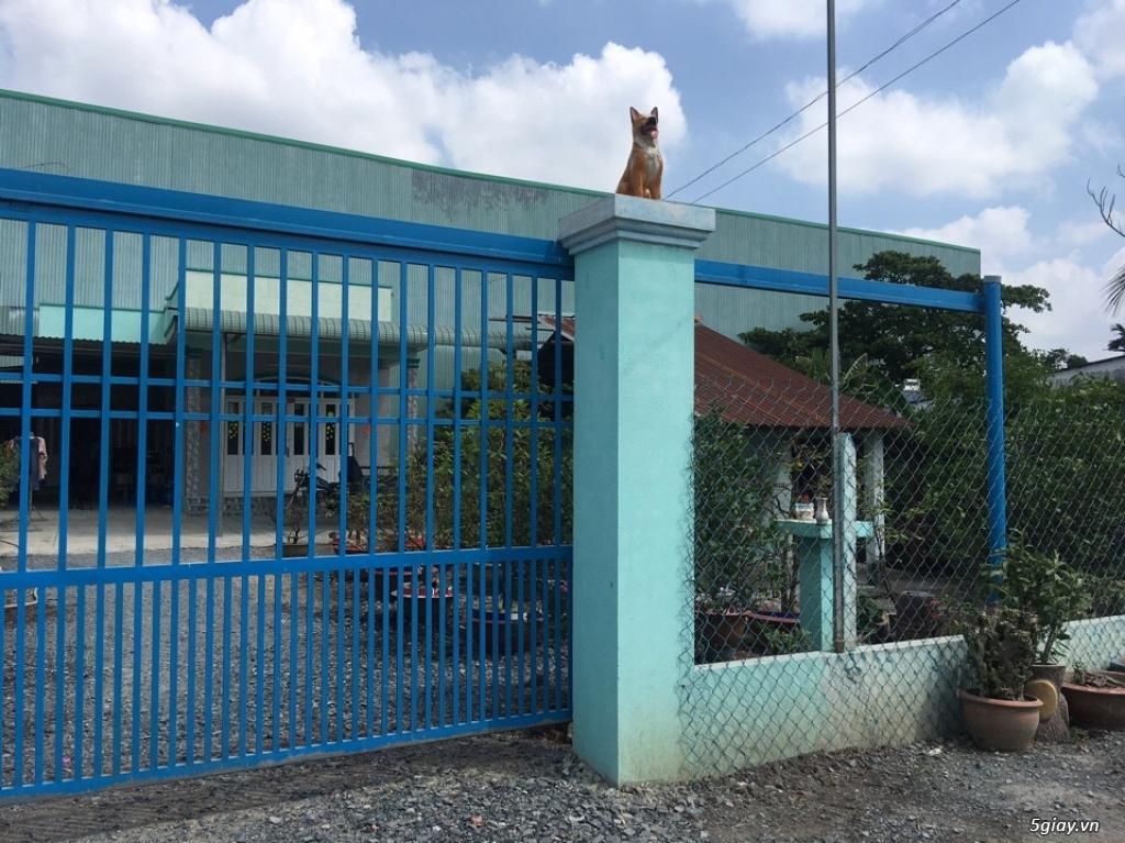 Bán Gấp Nhà Mặt Tiền Đường Lớn Vĩnh Phú 32(Hướng Chính Nam) DT 411,4 M - 12