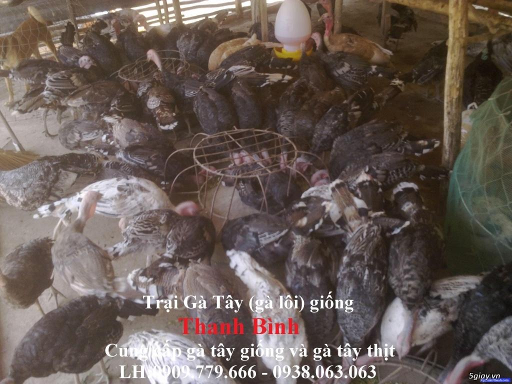 Trại gà tây Thanh Bình.Cung cấp gà tây thịt Giáng Sinh 2017 - 8