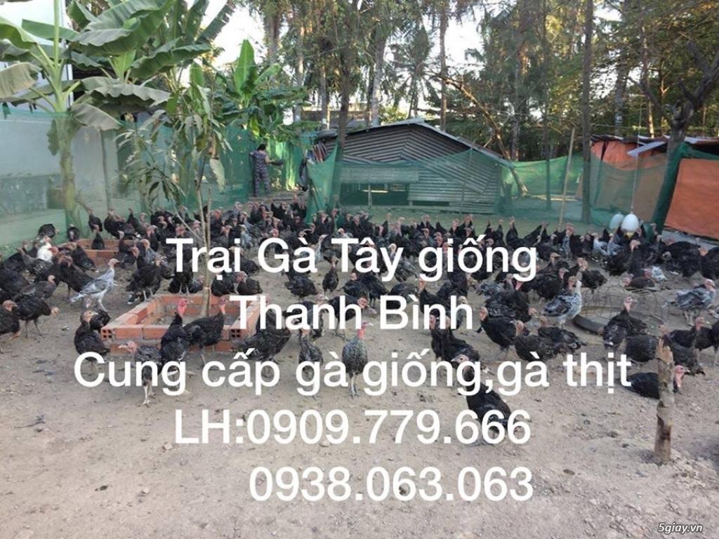 Trại gà tây Thanh Bình.Cung cấp gà tây thịt Giáng Sinh 2017 - 19