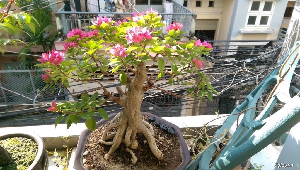 Giao lưu vài em bonsai mini giá mềm!!! - 7