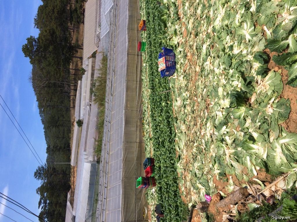 Dâu tây và các loại rau Đà Lạt - 1