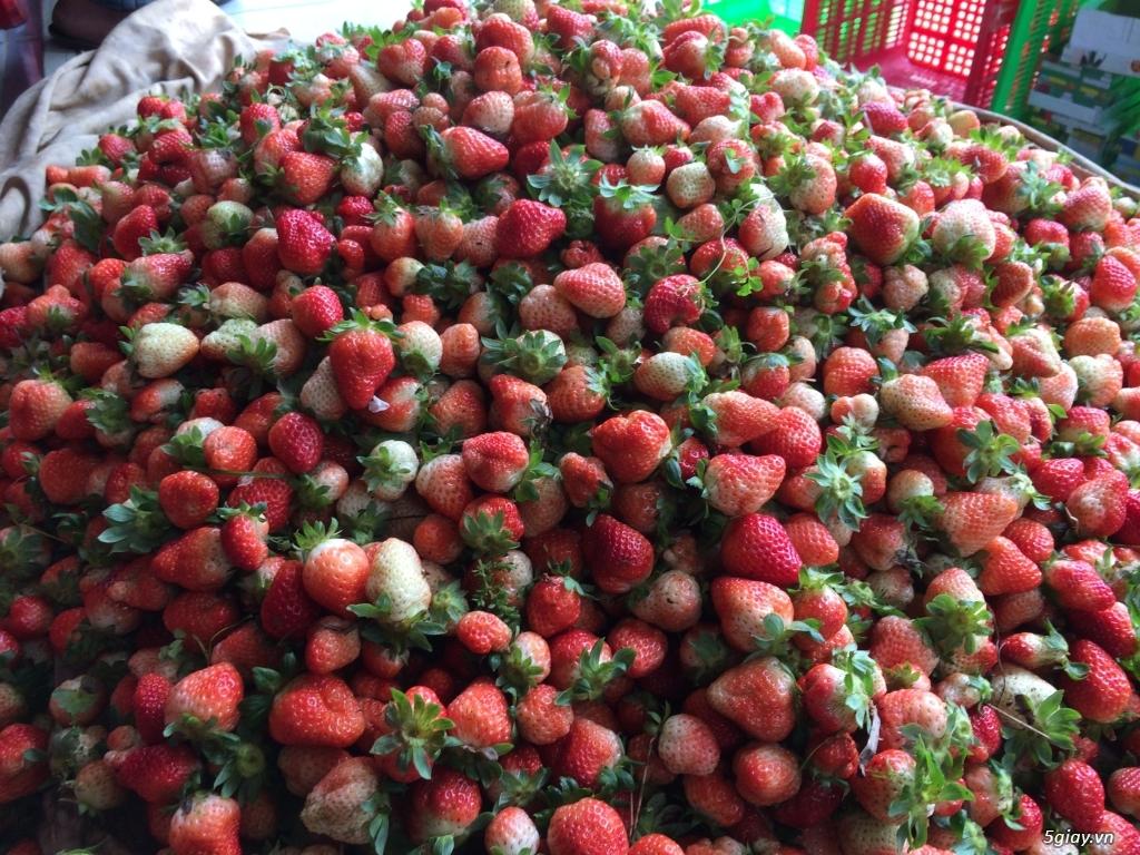Dâu tây và các loại rau Đà Lạt - 2