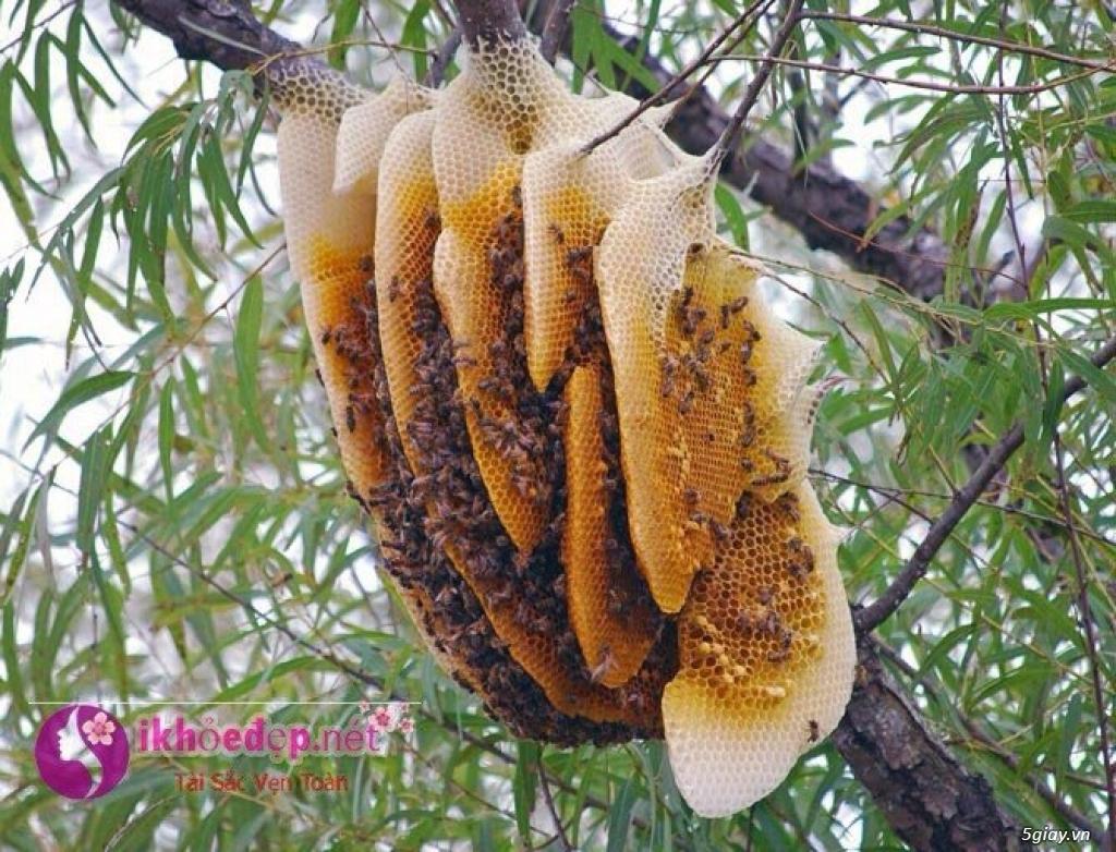 Mật Ong nuôi rừng Cao Su - 2
