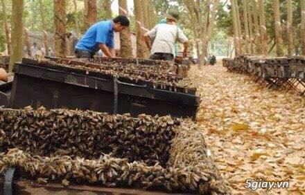 Mật Ong nuôi rừng Cao Su