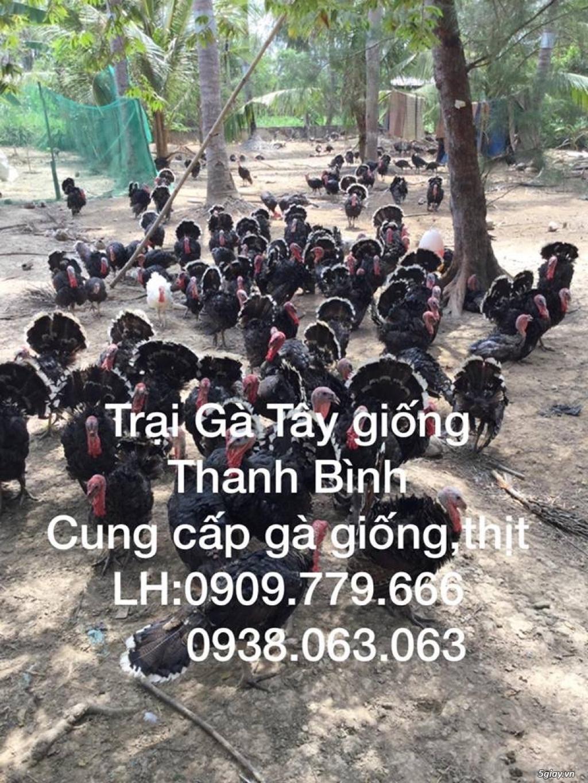 Trại gà tây(gà lôi) giống Thanh Bình.Chuyên cung cấp con giống LH:0909.779.666 - 21