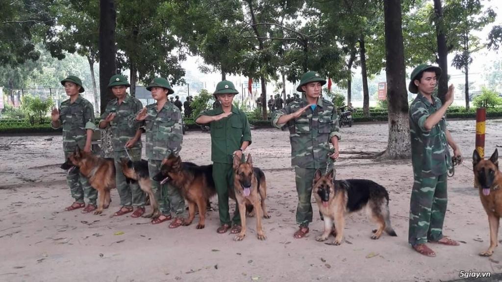 Huấn luyện chó quốc khuyển - 2
