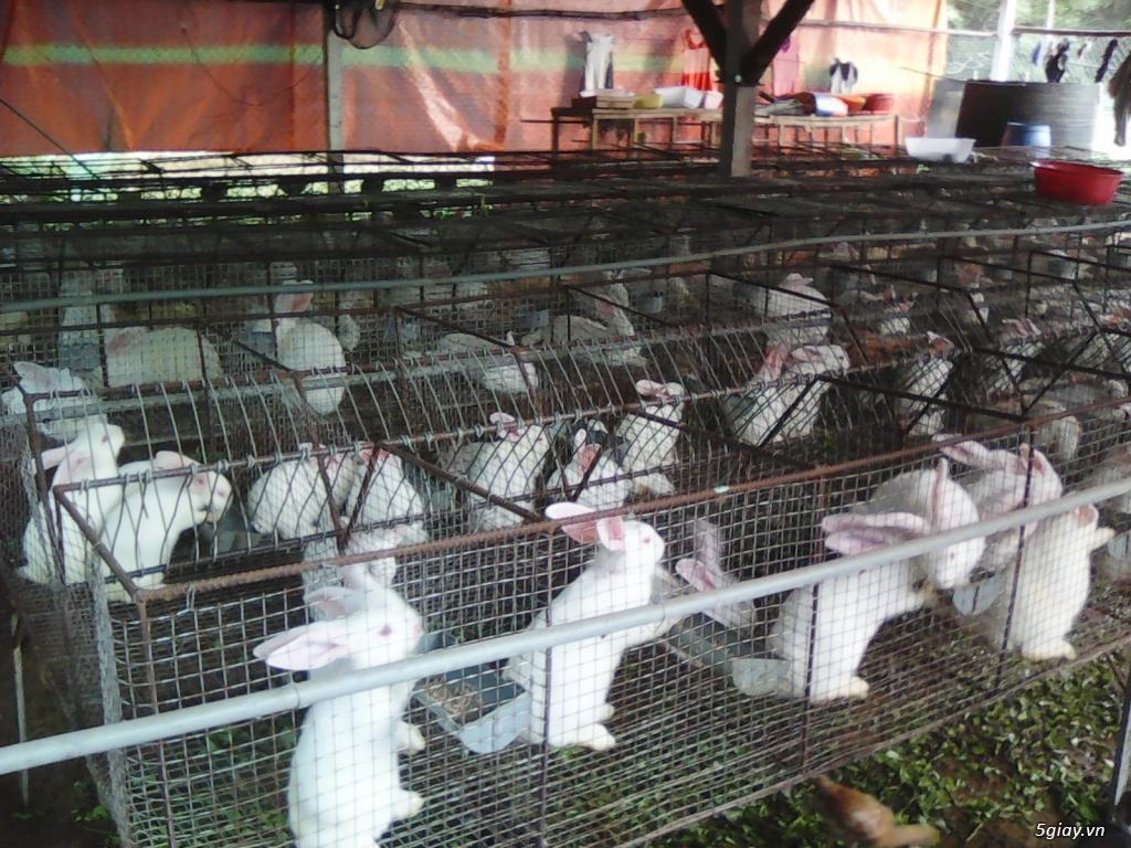 Cung Cấp Thịt Thỏ Số Lượng Lớn Tại TP HCM - 3