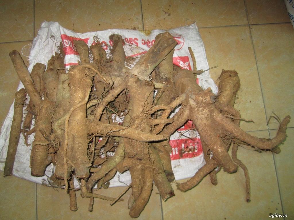 Bán rễ cây Đinh Lăng - 2