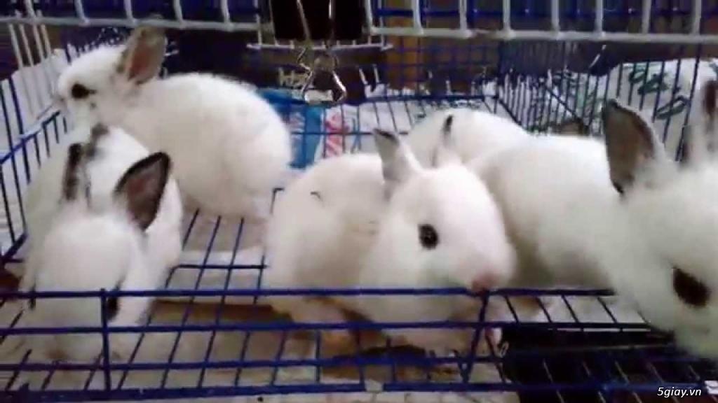 Bán thỏ con giá rẻ nhất tp hcm - 4