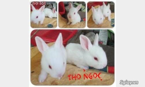 Bán thỏ con giá rẻ nhất tp hcm - 2