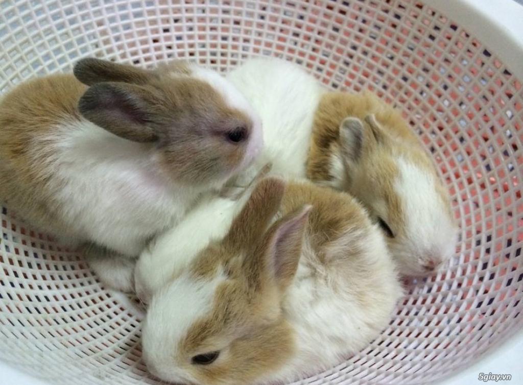 Bán thỏ con giá rẻ nhất tp hcm - 5