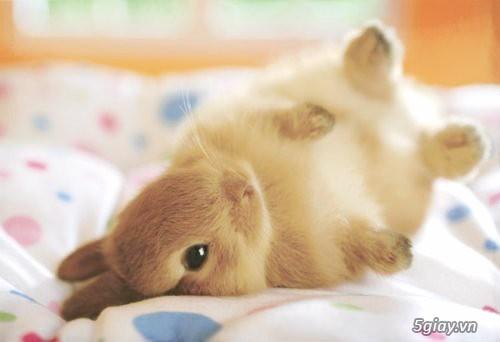 Bán thỏ con giá rẻ nhất tp hcm