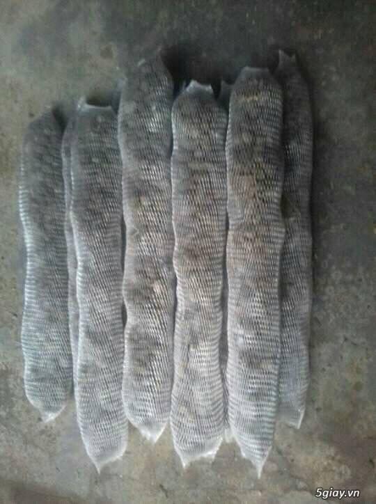 bán gổ vú sữa trồng lan - 1