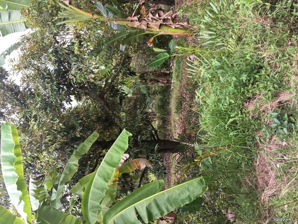 Đất nông nghiệp dt 9000m2 tại xã an phước huyện mang thít vĩnh long - 4