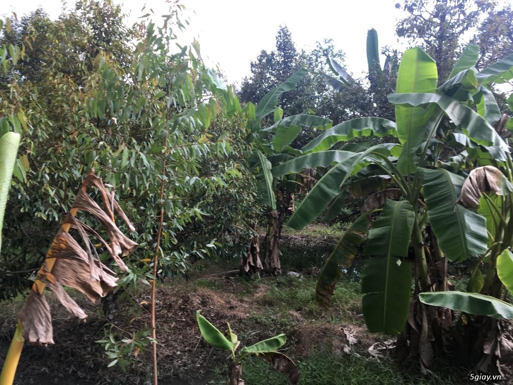 Đất nông nghiệp dt 9000m2 tại xã an phước huyện mang thít vĩnh long